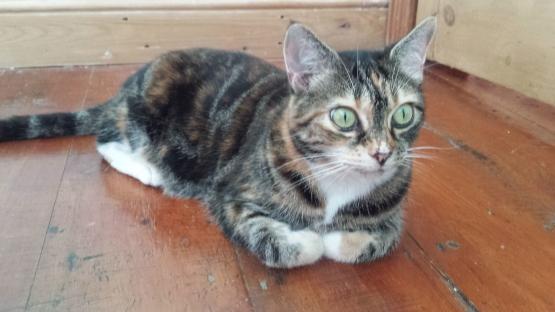 Cat floor